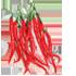 Cabe Merah Keriting