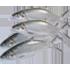Ikan Bandeng (sedang)